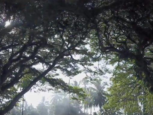 Kokoda … the spirit lives